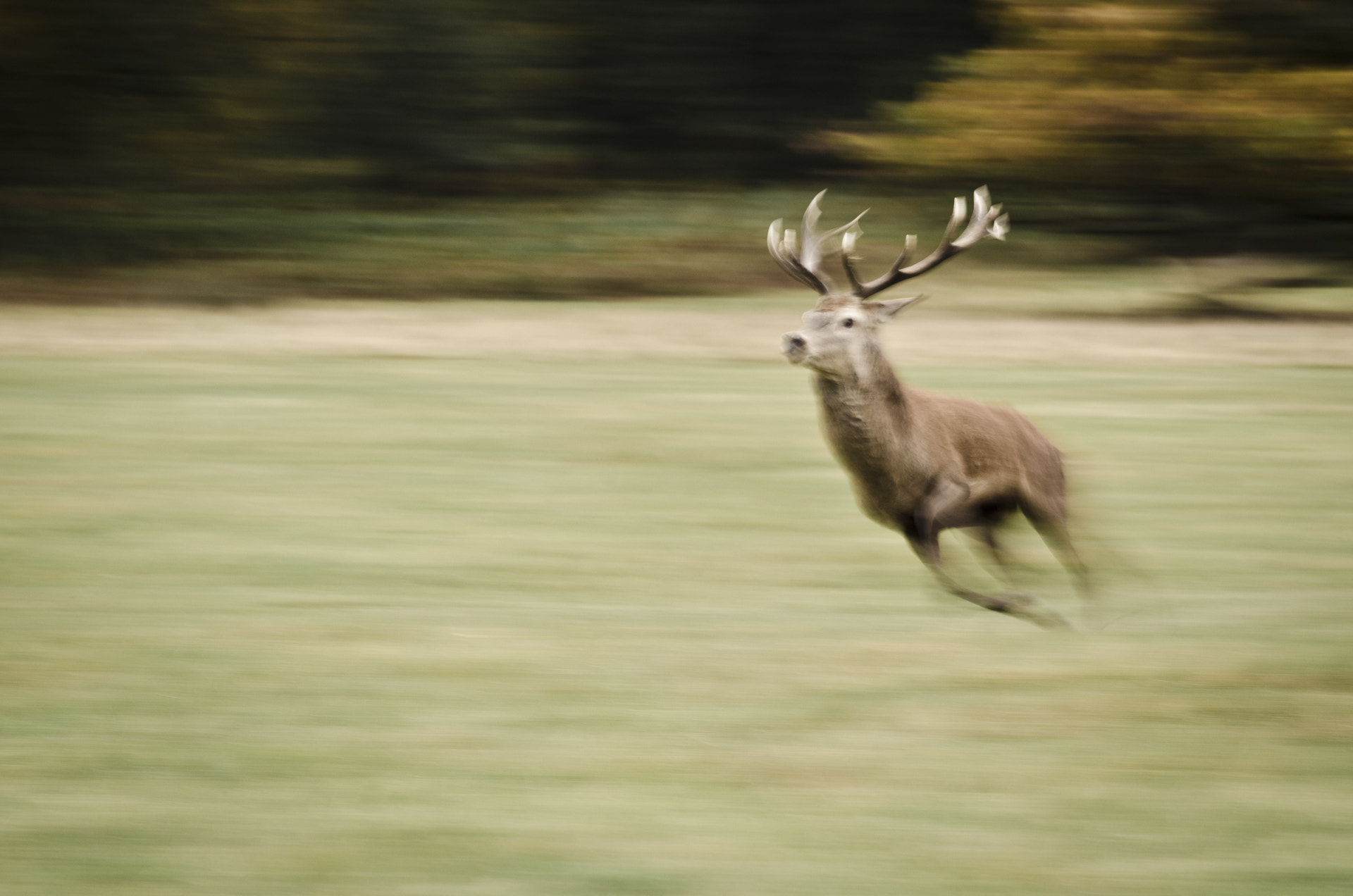 Photograph Sprinting Stag by Luke Millward on 500px