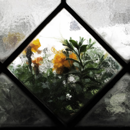 Flower in the window, Fujifilm FinePix AX600