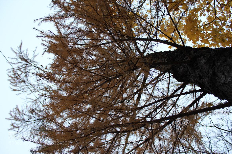 Photograph Oh,autumn by Natasha  Matveeva on 500px