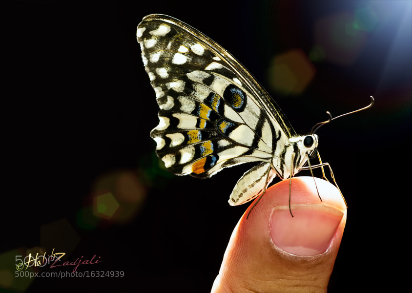 Photograph Butterfly on Thumb by Habib Zadjali on 500px