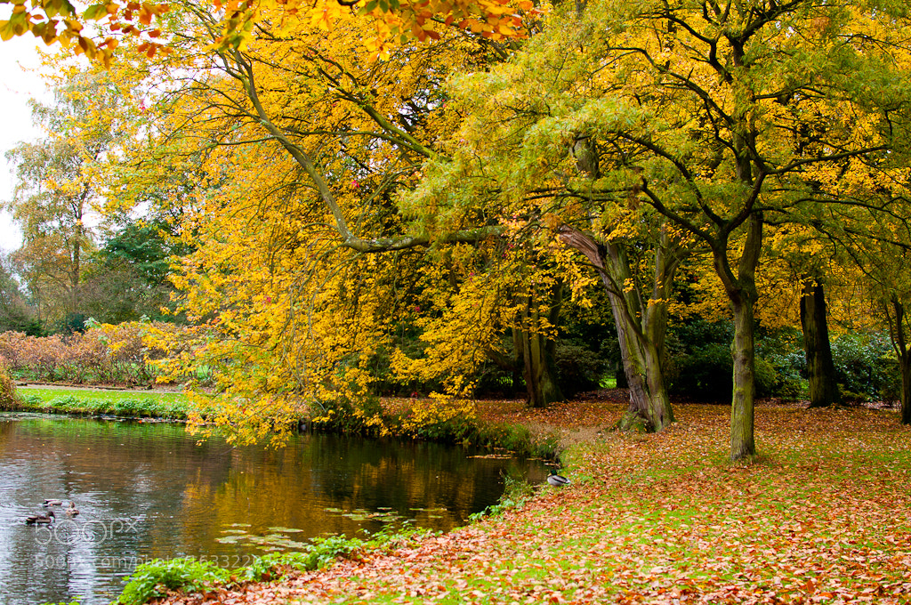 Photograph autumn by LiangJin Lim on 500px