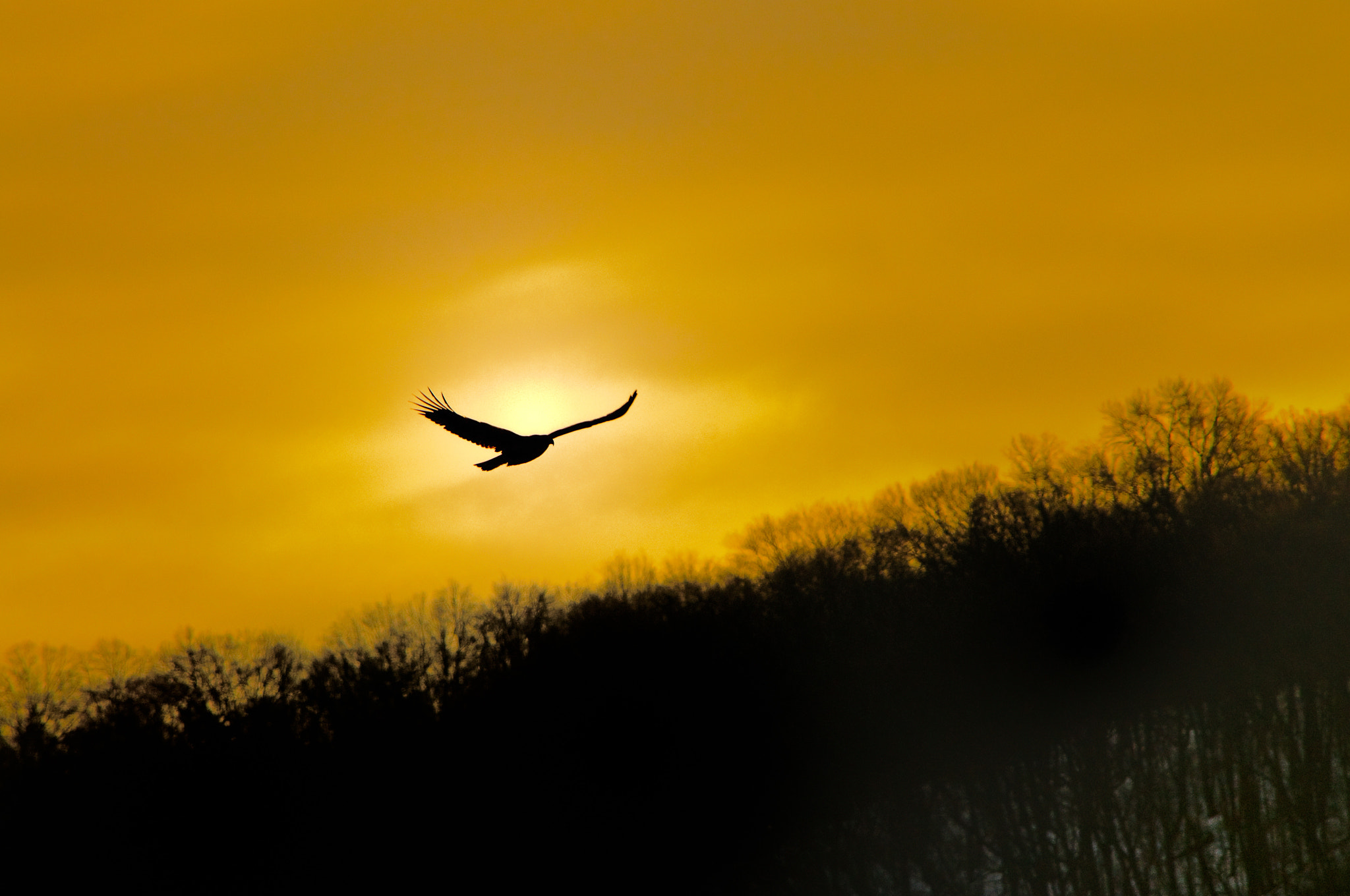 Photograph Soaring by Steve Wetzel on 500px