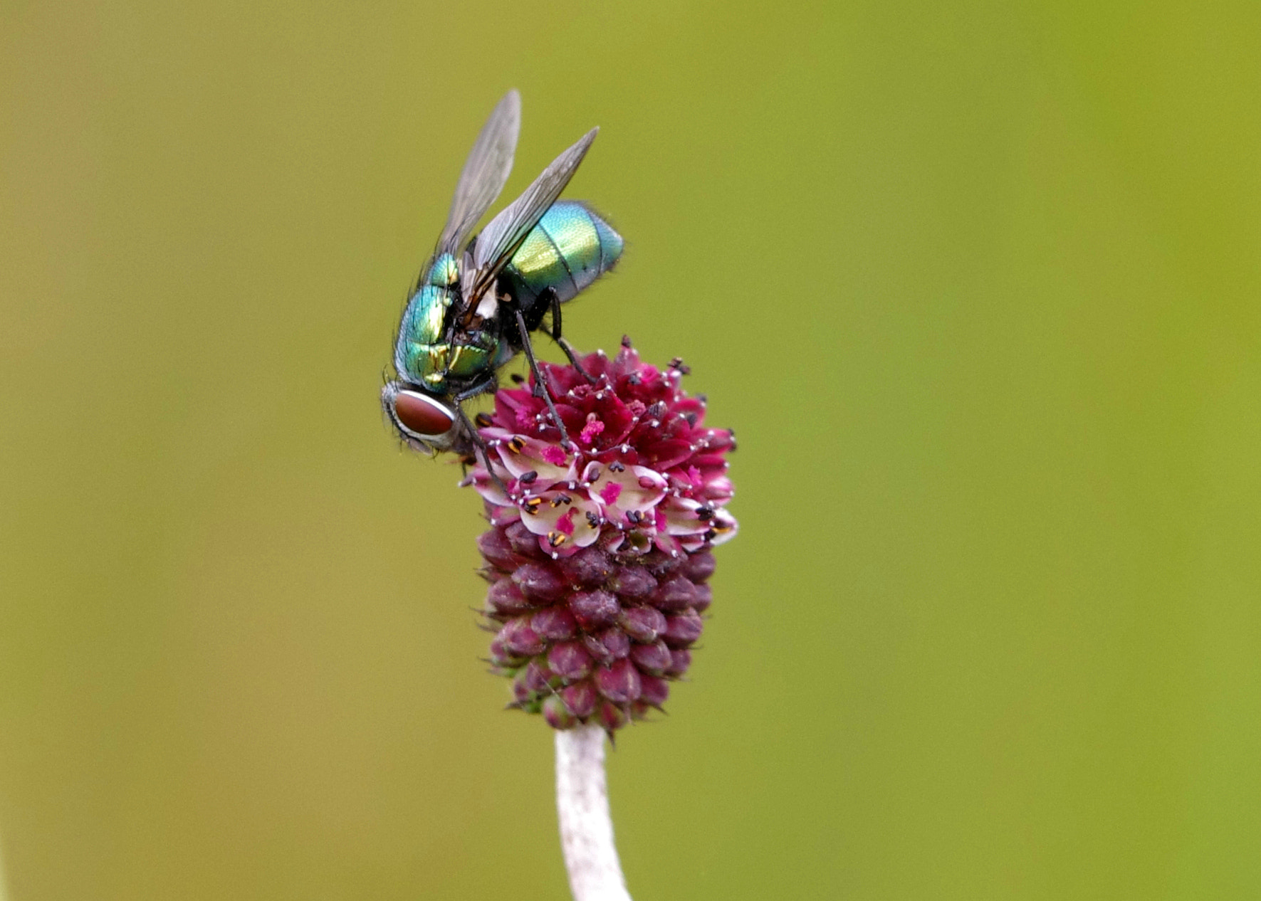 Photograph Fly Macro by Charlie Clayton on 500px