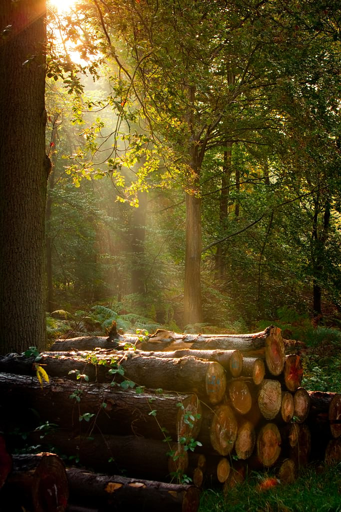 Photograph Sun rays in the forest by Andy Van Tilborg on 500px