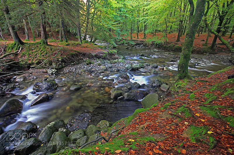 Photograph Tollymore Forest Park by Brian Curran on 500px