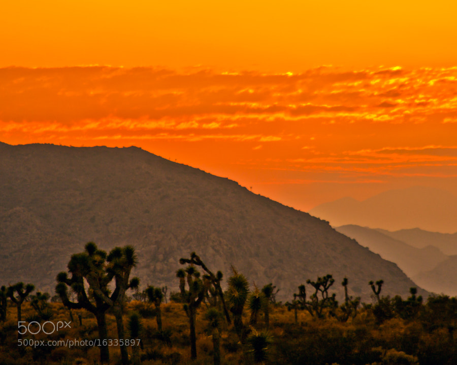 Sun going down in the Joshua Tree National Park, in the deserts just outside of Indio
