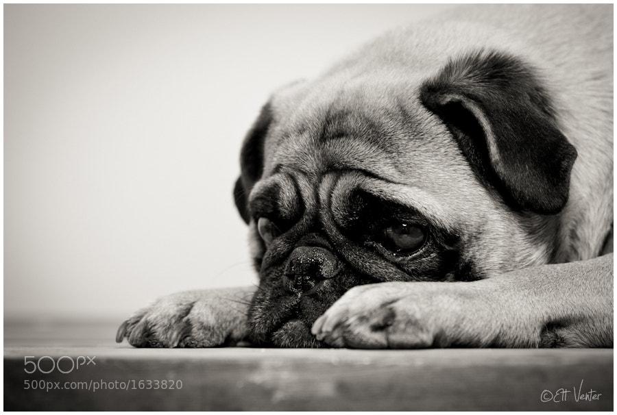 Photograph Heartbroken... by Ett Venter on 500px