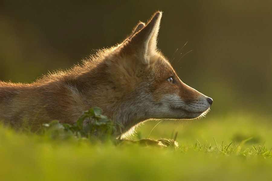 Photograph That Summer Feeling by Roeselien Raimond on 500px