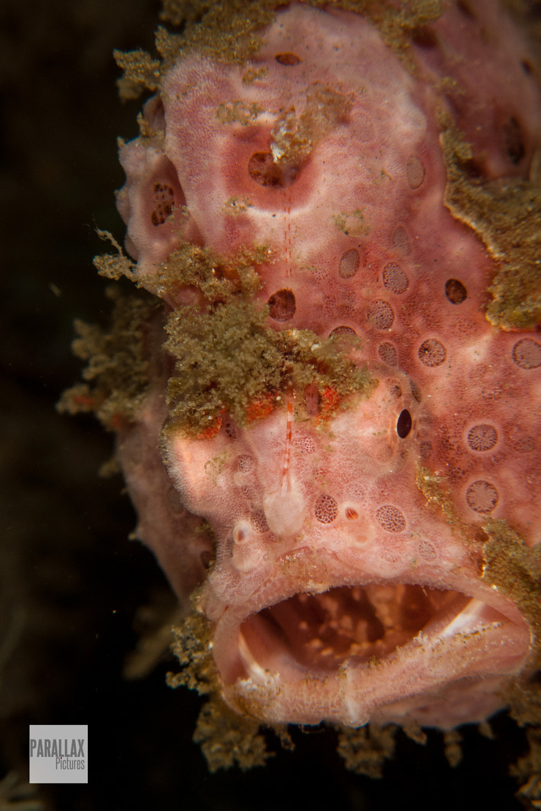 Photograph Frog Fish by Jess Newley on 500px