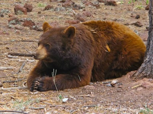 Photograph Praying Bear by Carra Riley on 500px