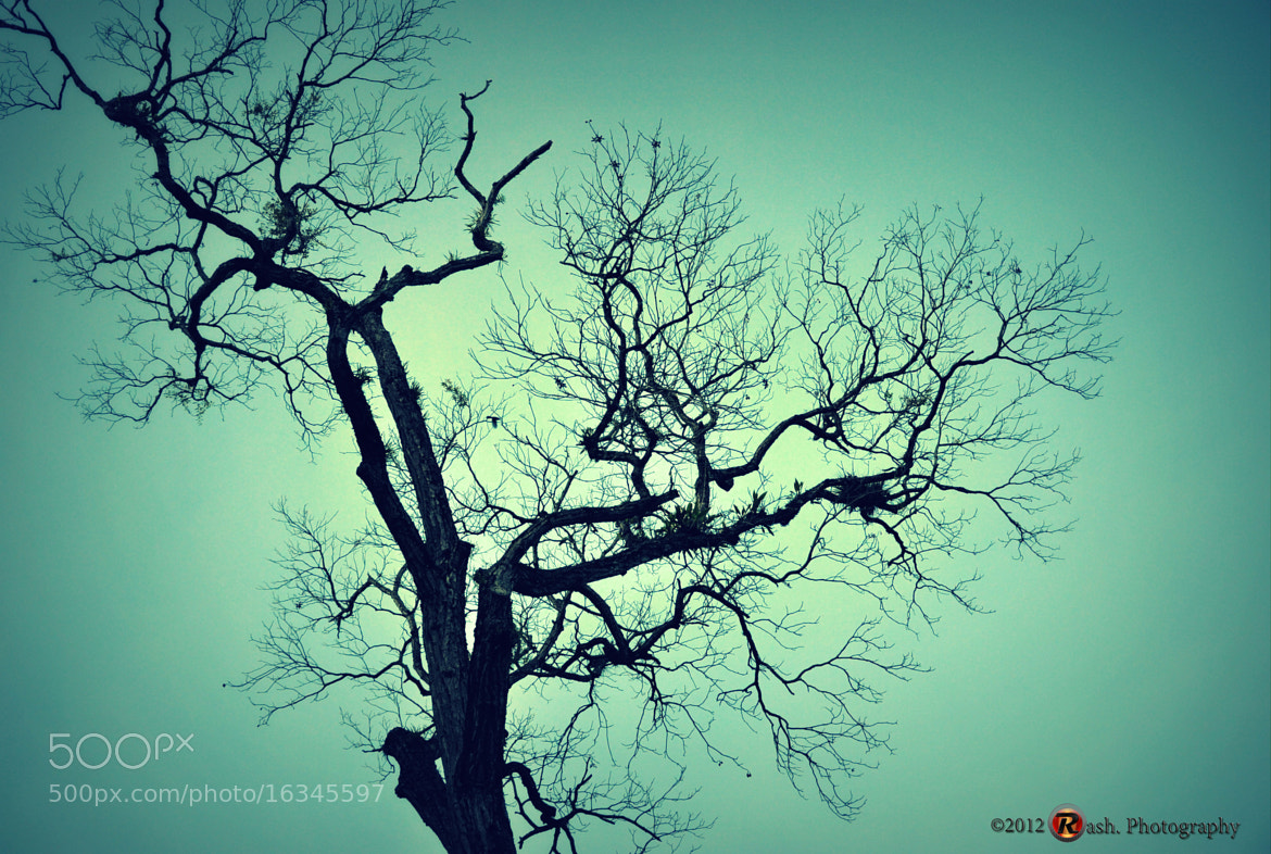 Photograph the tree by Fadiel Baksoellah on 500px