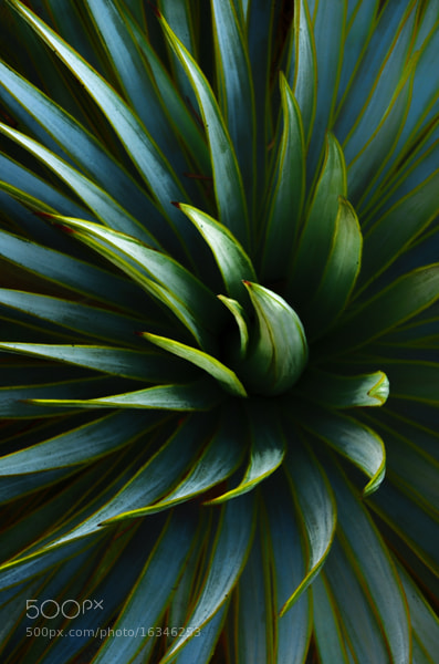 Photograph Desert Plant by Mike Moats on 500px