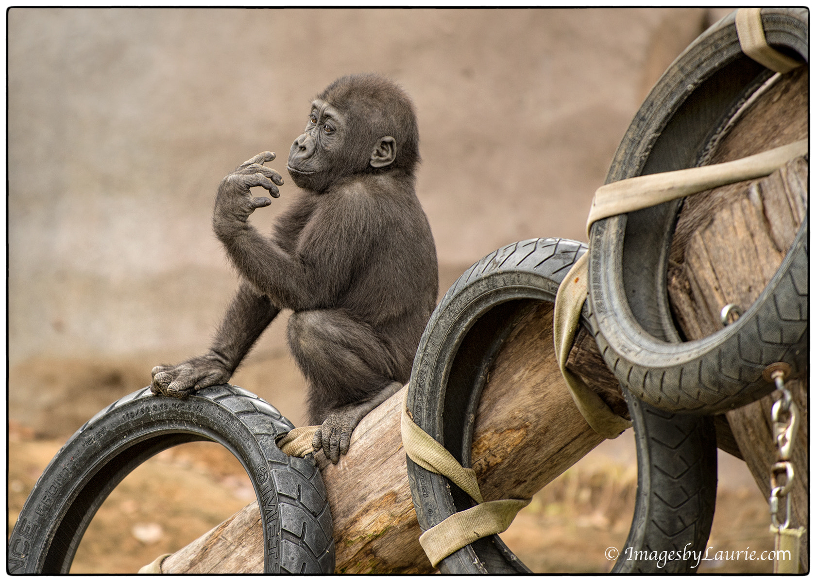 Photograph Counting Tires by Laurie Rubin on 500px