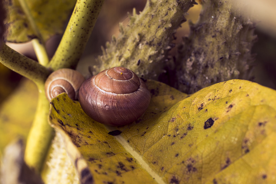 Photograph Home on a leaf by Aaron Victor on 500px