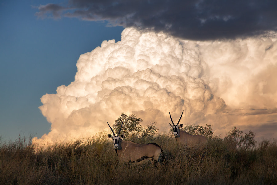 Ode to the Kalahari by Keith Connelly 1