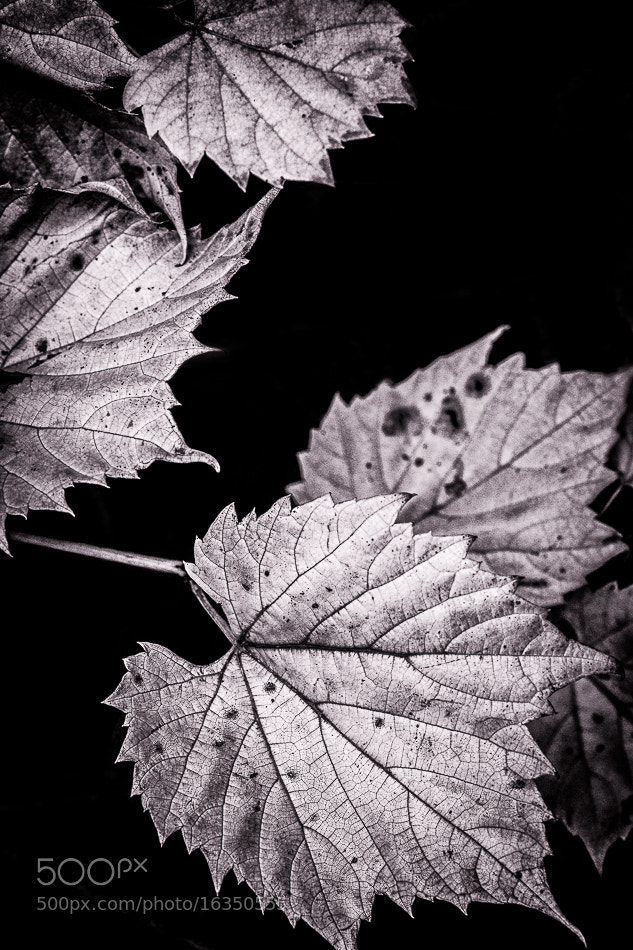 Photograph Fall Foliage by Kaustubh Thapa on 500px