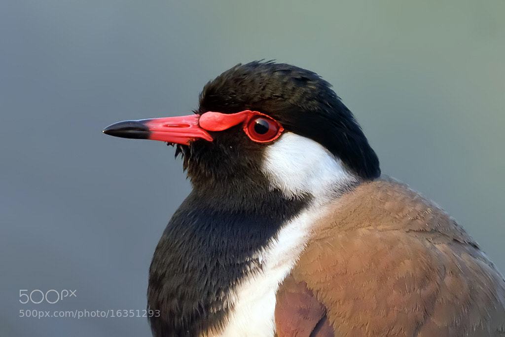 Photograph Red Eye by Nitin  Prabhudesai on 500px