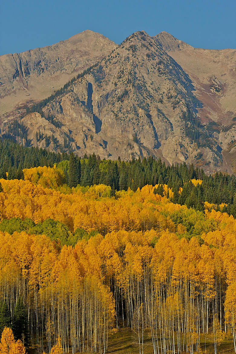 Photograph Fall Color on Kebler Pass by Loree Keeble on 500px