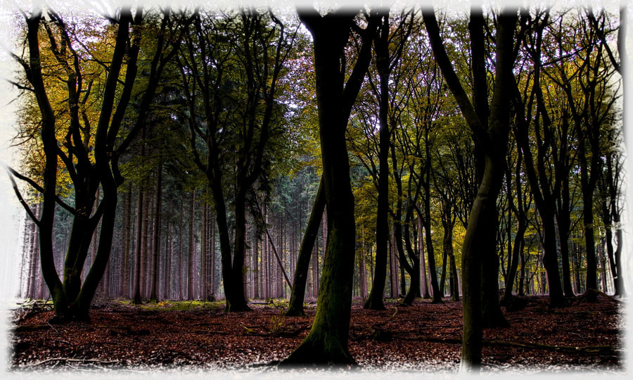 Photograph Forrest Walk by Cor Pijpers on 500px