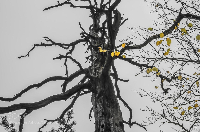 Photograph Spuren der Zeit by Leo Pöcksteiner on 500px