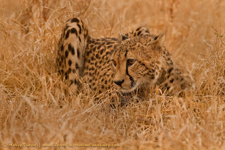 Photograph Subtle Hues of Gold by Ashley Vincent on 500px