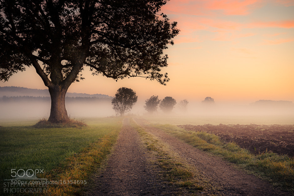 Photograph Fog Path by Stefan Hefele on 500px