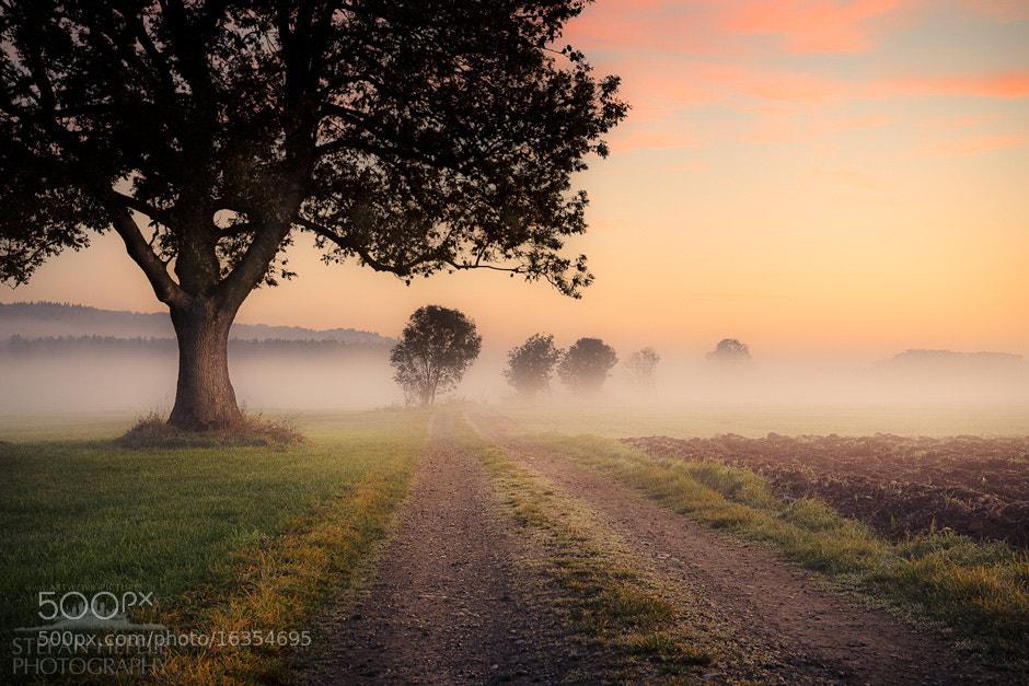 Photograph Fog Path by Stefan Hefele on 500px