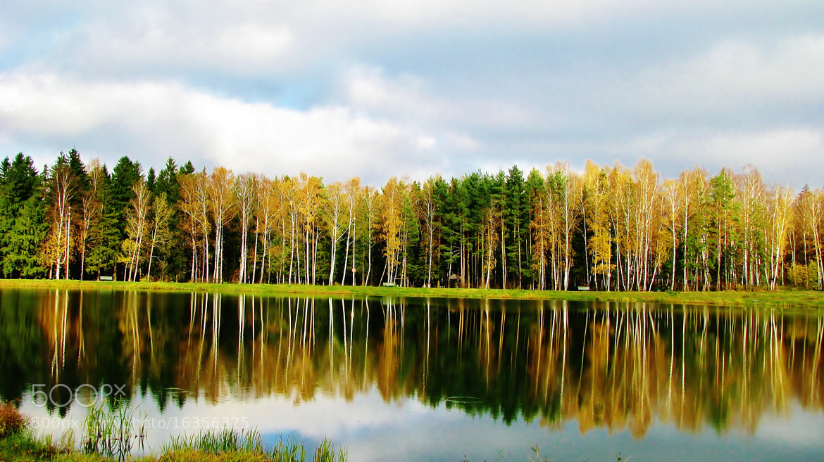 Photograph woods by the lake by Konst&Jul EC on 500px