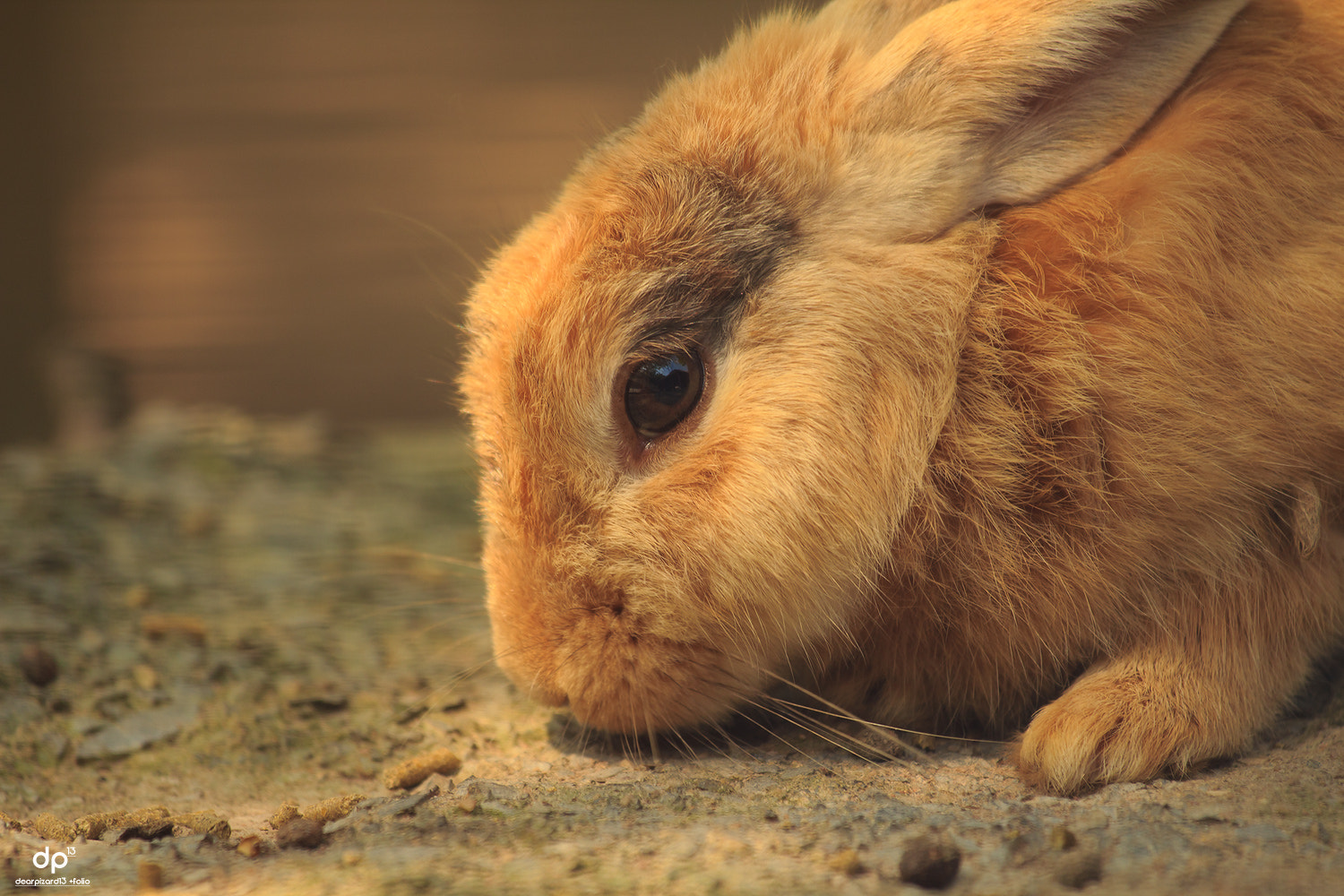 Photograph warm rabbit by Wisarut Thammathatto on 500px