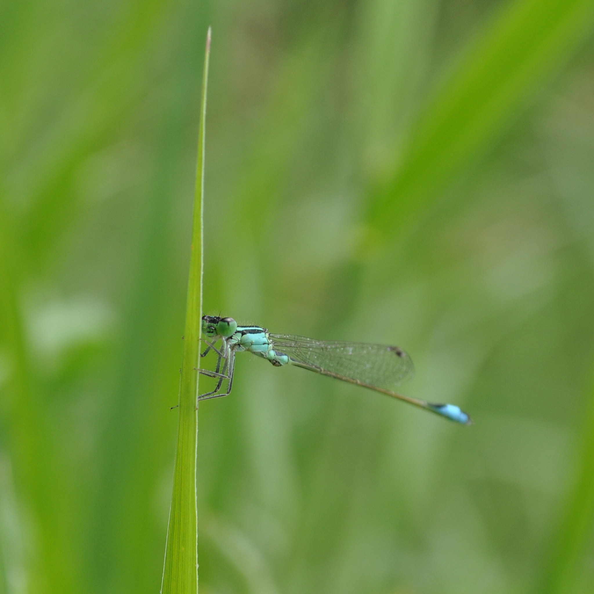 Photograph Dragonfly by Ciprian Vidroiu on 500px