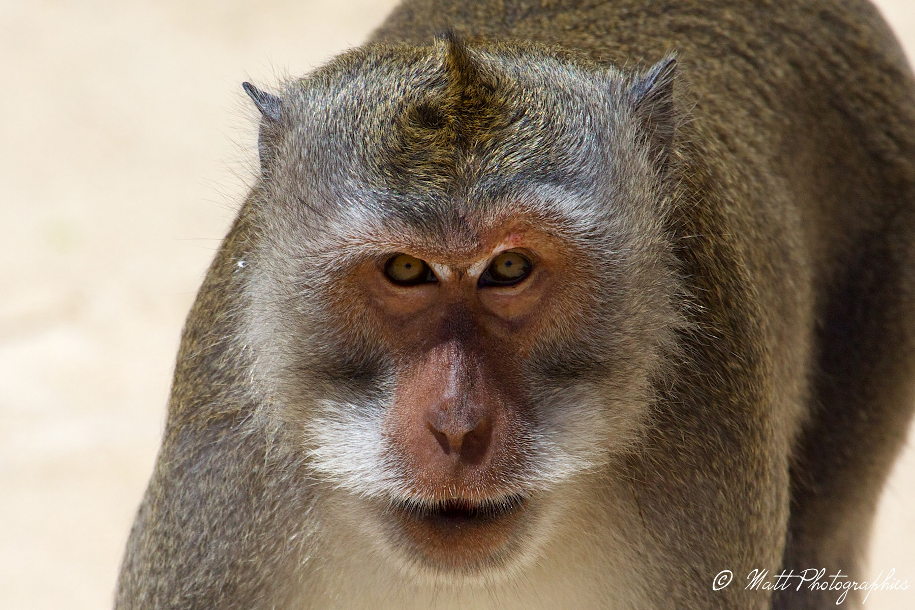 Photograph monkey by Matthieu Lucas on 500px