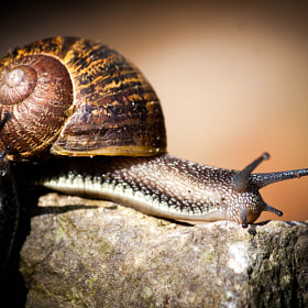 snail by ronny van casteren (rvc)) on 500px.com