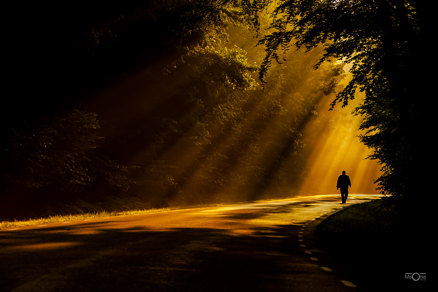 Golden Path by Magnus Svensson on 500px.com