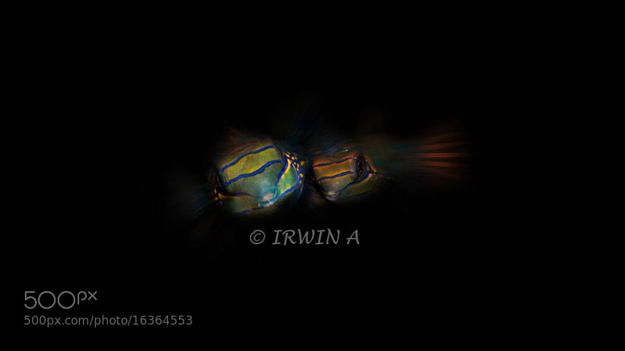 The Mandarin Fish by IRWIN ANG (mackasha) on 500px.com