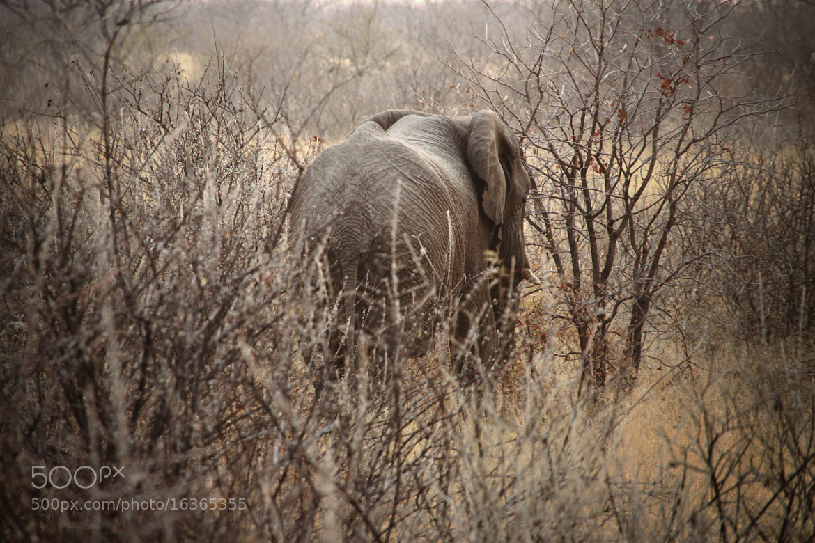 Photograph Elephant by Christian Wagner on 500px