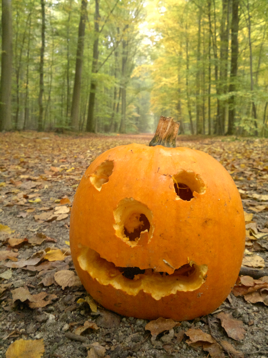Photograph Are you ready for the Halloween? by Katja Sen on 500px