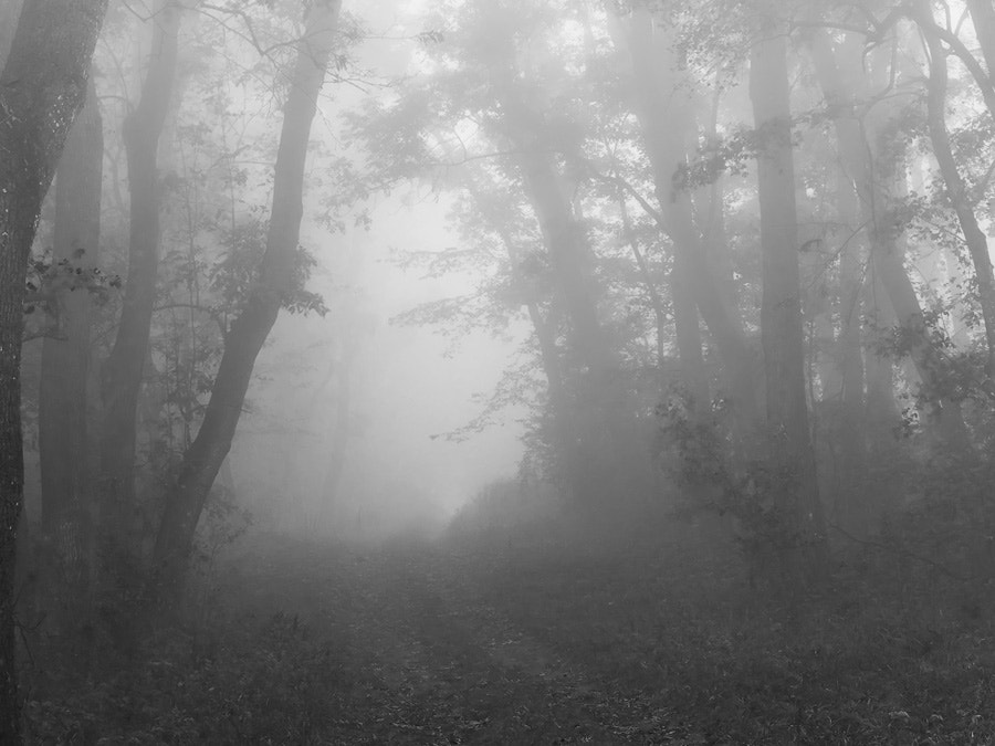 Photograph morning fog in forest by Manfred Huszar on 500px