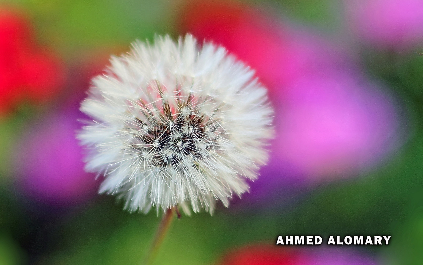 Photograph * by Ahmed Alomary on 500px