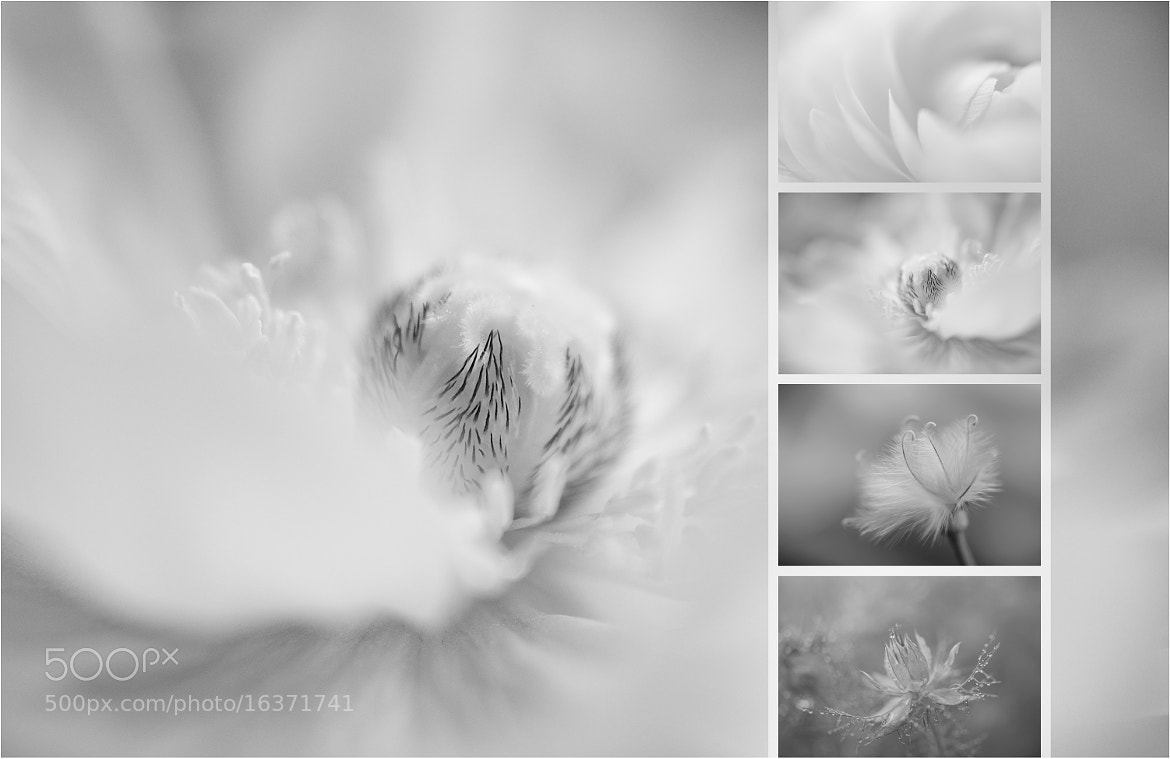 Photograph floral colors ...   ... bw by pho-t-ographic-s * on 500px