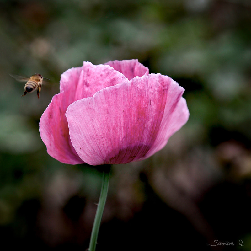 Photograph The Beauty And The Beast .. by Sawsan Mohammed on 500px