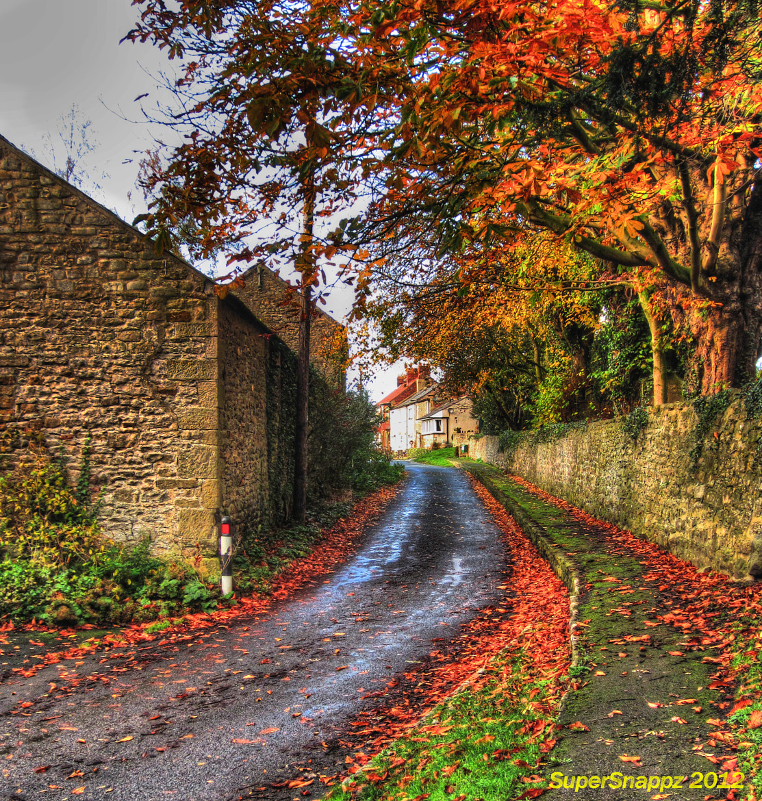 Photograph Autumn Road by Anthony  on 500px