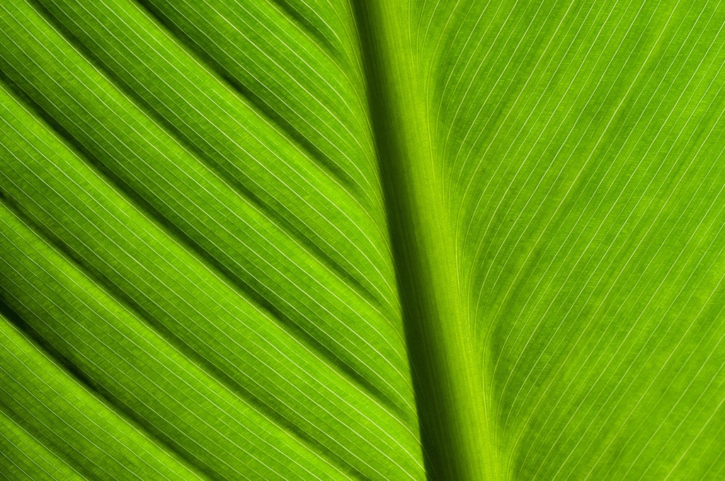 Photograph Leaf by Umberto Salvagnin on 500px