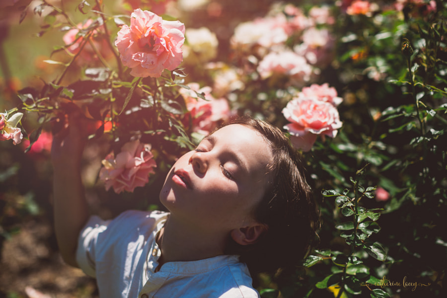 Scent of a rose by Catherine Lacey Dodd on 500px.com