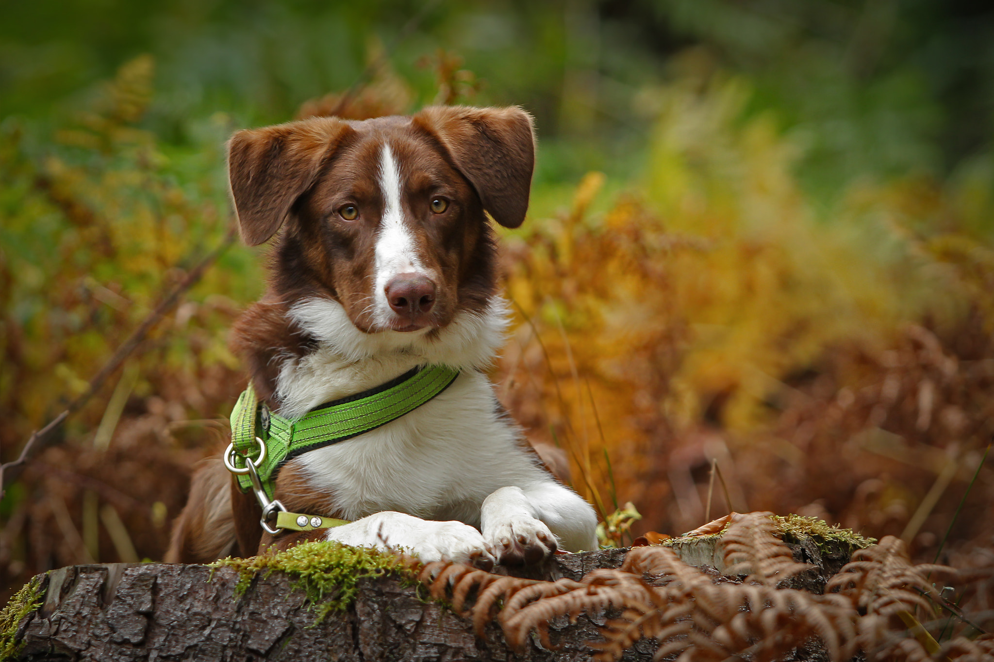 Photograph dog in the wood by Mathias Ahrens on 500px