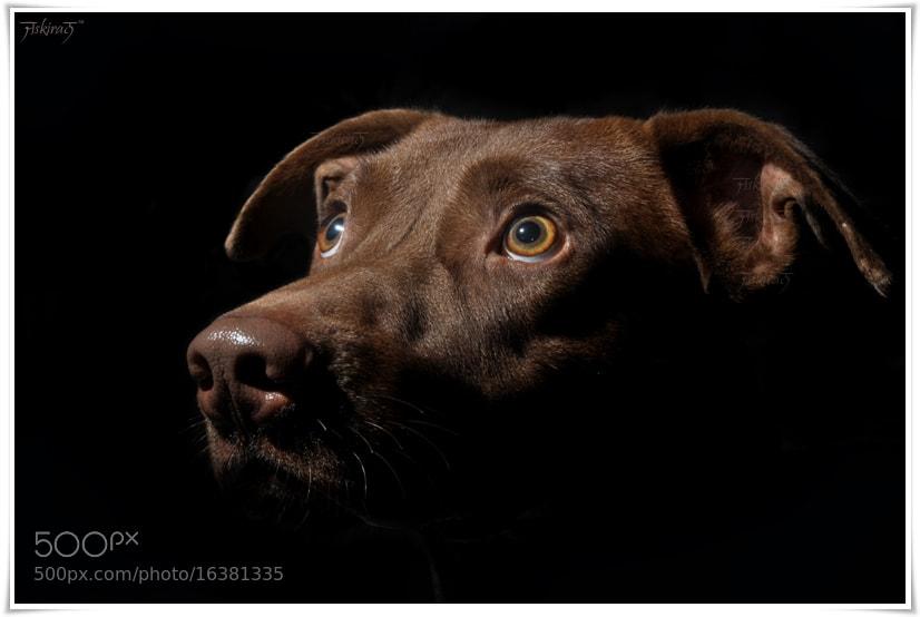 Photograph A dog under the light by Jaskiran Singh Batra on 500px