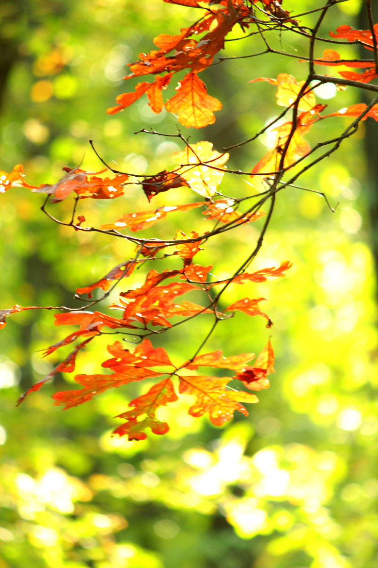 Photograph First Fall glimpse by David Jesson on 500px