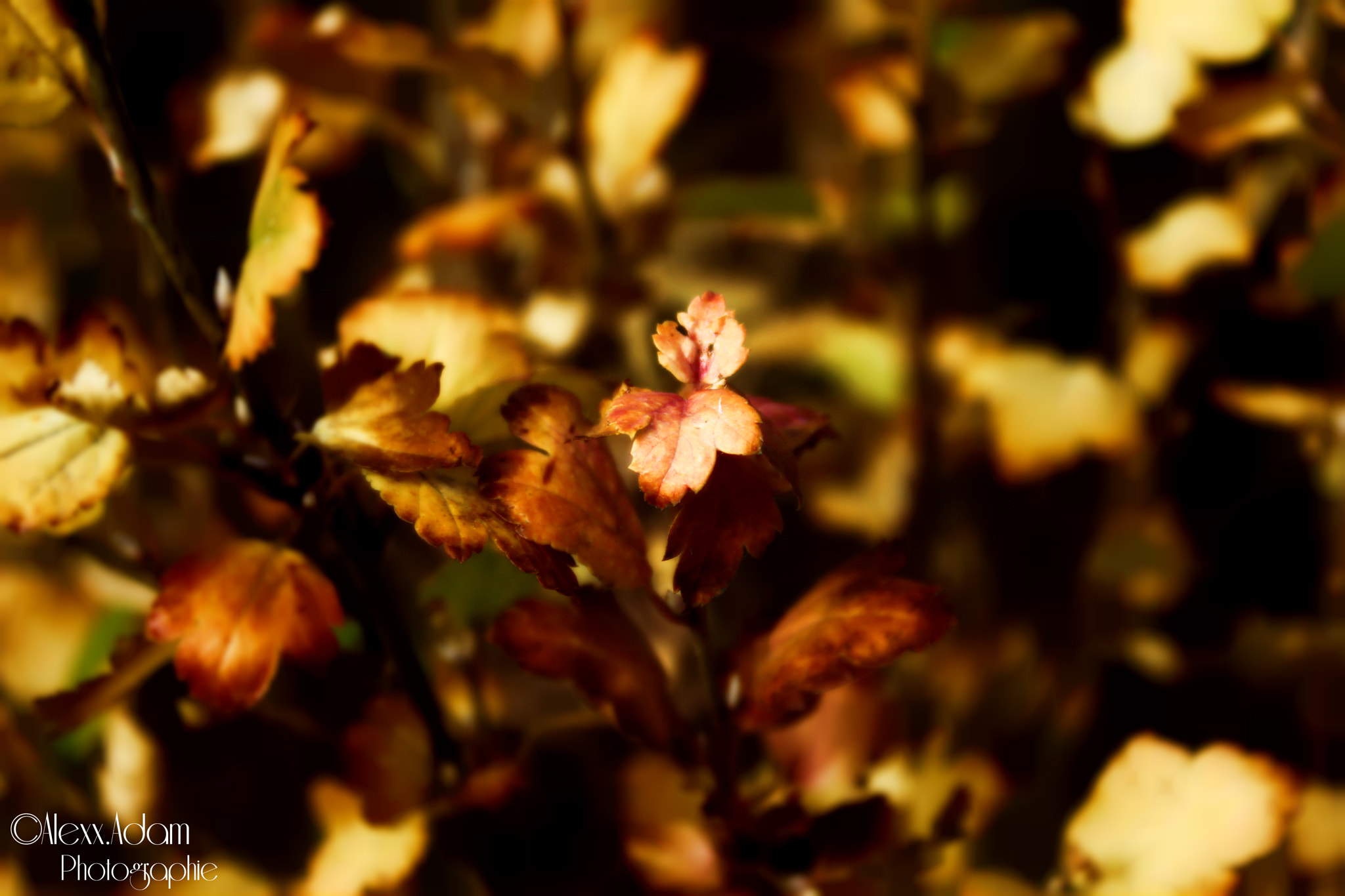 Photograph Automn coming by Alexx Adam on 500px