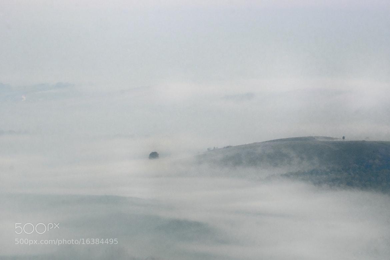 Photograph Fog river by László Becs on 500px