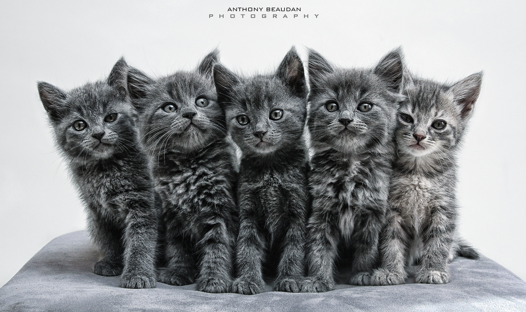 Photograph The A Team !  by Anthony Beaudan on 500px