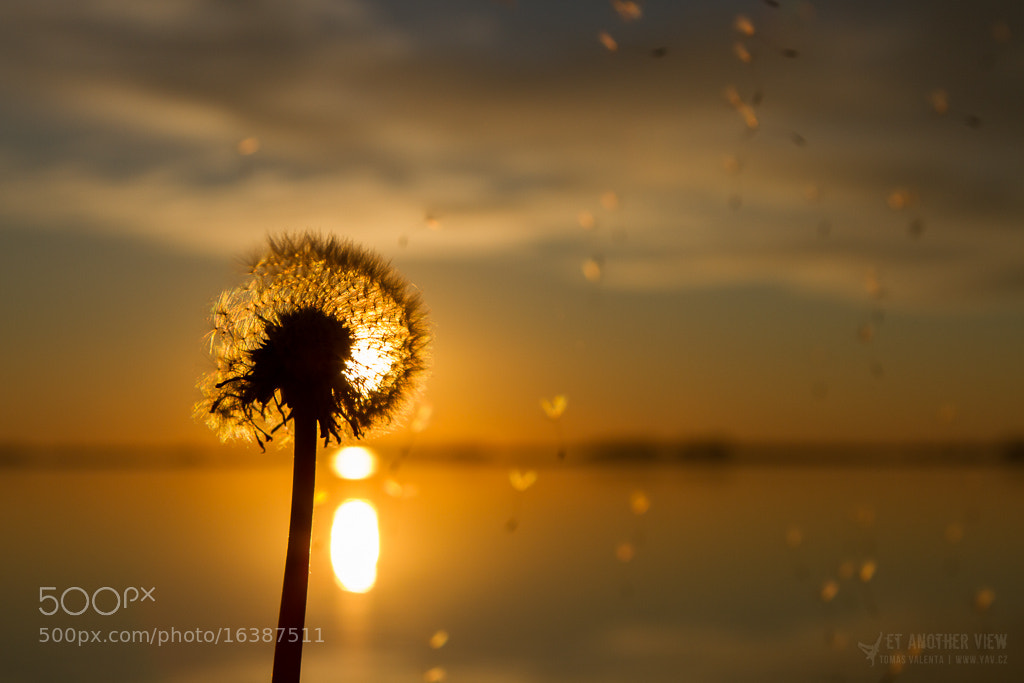 Photograph Make A Wish by Tomas Valenta on 500px